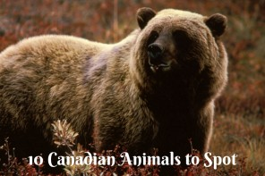 Animals in Canada