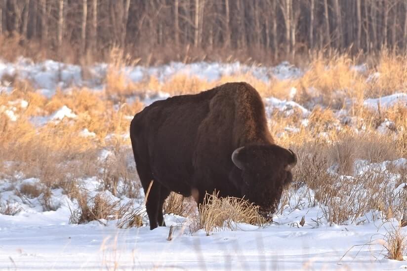 Animal In Edmonton, Canada