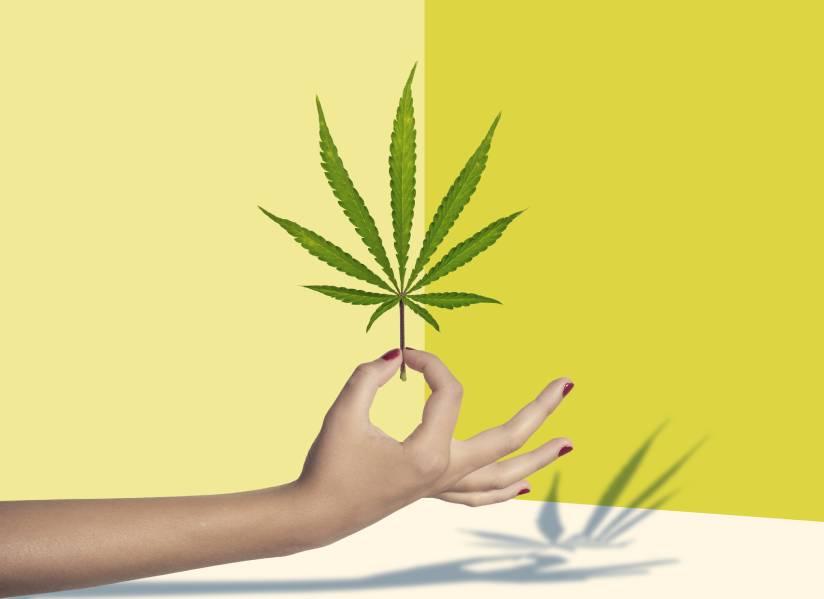 A hand holding marijuana