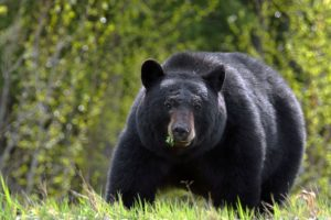 Animals you may encounter in Banff or Whistler