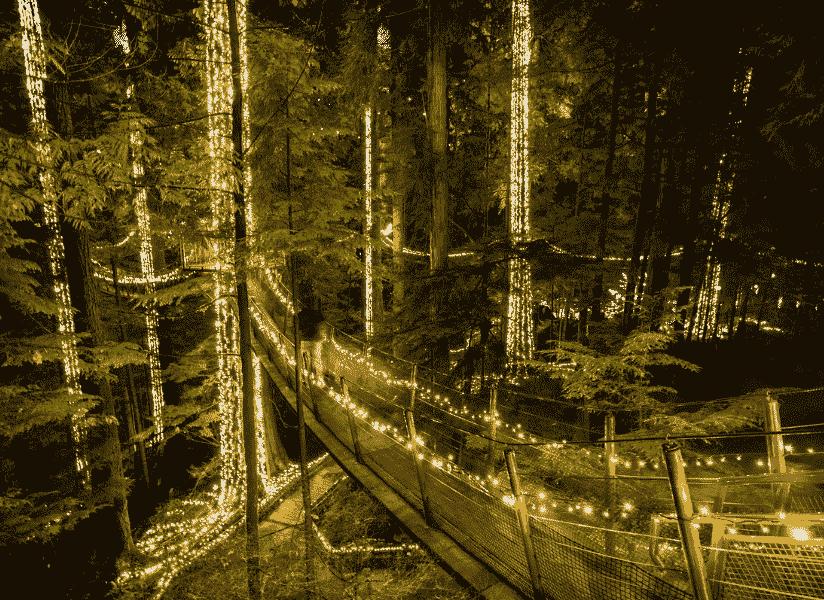 Canyon Lights, Capilano Suspension Bridge, Vancouver, British Columbia
